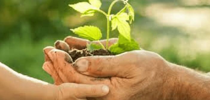 Les Plantes Sauvages pour Booster Votre Vie